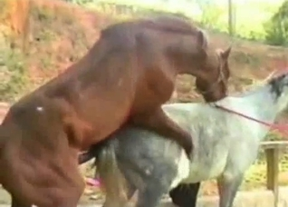 Close-up horse sex video, impressive