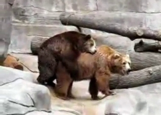Two bears fucking in front of a cam