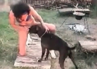 Black dog gets to lick human pussy